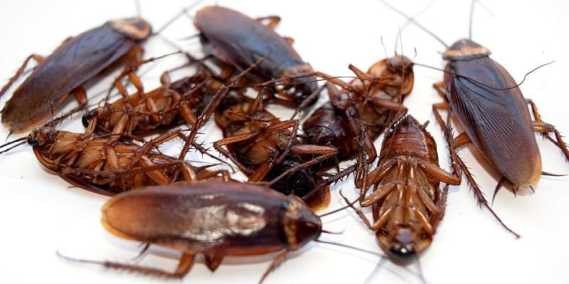Effective DIY Techniques to Get Rid of Cockroaches